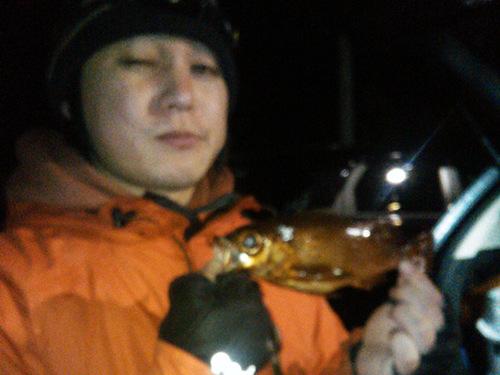 静岡メバル23cm